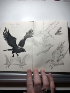raven sketches by Jeff Cox